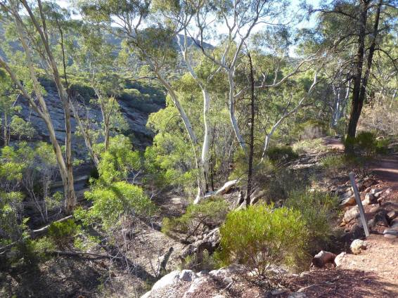 Looking down into Mambray Creek along a walking trail in Mt Remarkable NP